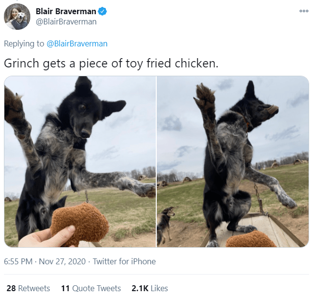 Canidae - Blair Braverman @BlairBraverman 000 Replying to @BlairBraverman Grinch gets a piece of toy fried chicken. 6:55 PM · Nov 27, 2020 · Twitter for iPhone 28 Retweets 11 Quote Tweets 2.1K Likes