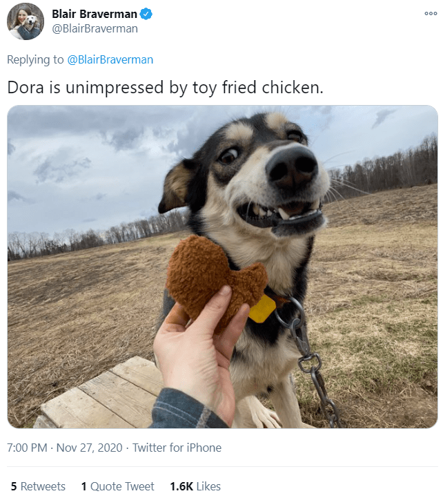 Dog - Blair Braverman @BlairBraverman 000 Replying to @BlairBraverman Dora is unimpressed by toy fried chicken. 7:00 PM · Nov 27, 2020 · Twitter for iPhone 5 Retweets 1 Quote Tweet 1.6K Likes