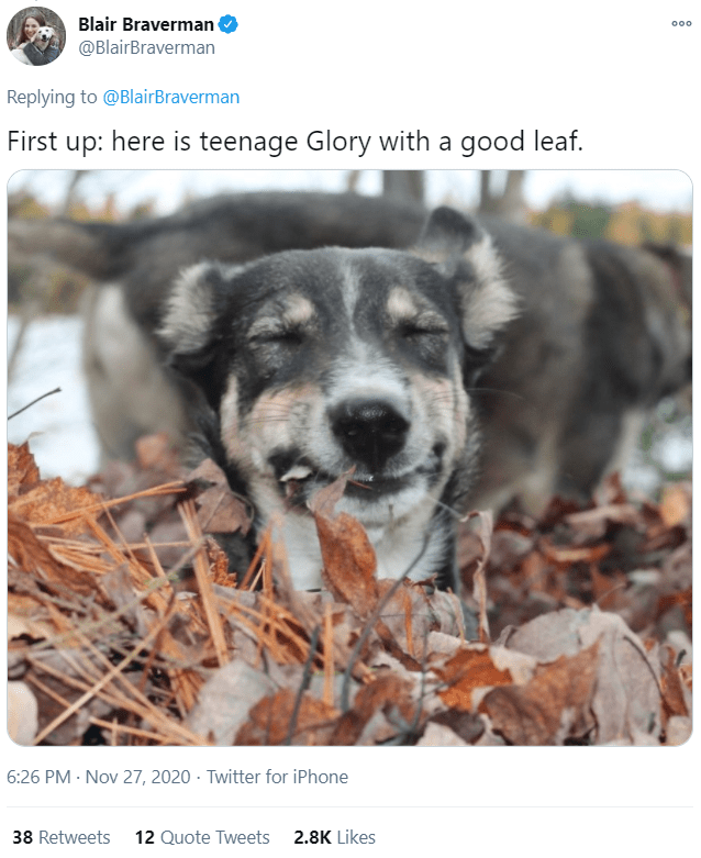 Dog - Blair Braverman 000 @BlairBraverman Replying to @BlairBraverman First up: here is teenage Glory with a good leaf. 6:26 PM · Nov 27, 2020 · Twitter for iPhone 38 Retweets 12 Quote Tweets 2.8K Likes