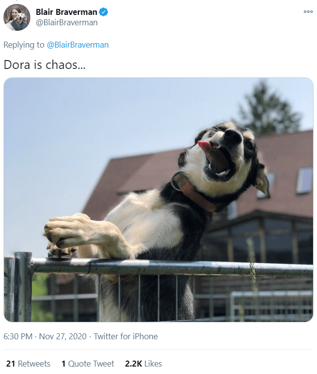 Photo caption - Blair Braverman @BlairBraverman 000 Replying to @BlairBraverman Dora is chaos... 6:30 PM · Nov 27, 2020 · Twitter for iPhone 21 Retweets 1 Quote Tweet 2.2K Likes