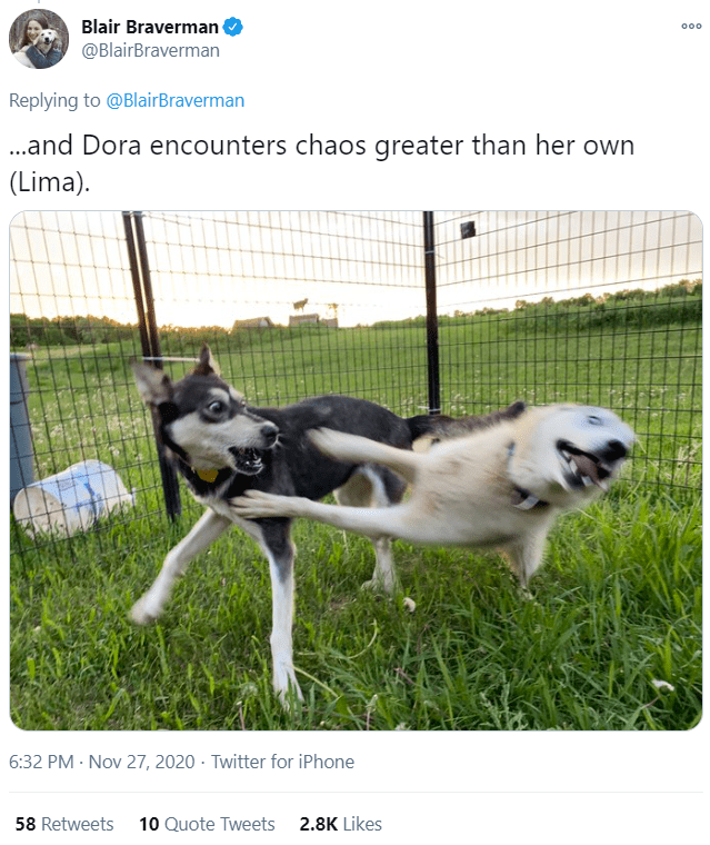 Mammal - Blair Braverman 000 @BlairBraverman Replying to @BlairBraverman .and Dora encounters chaos greater than her own (Lima). 6:32 PM · Nov 27, 2020 · Twitter for iPhone 58 Retweets 10 Quote Tweets 2.8K Likes