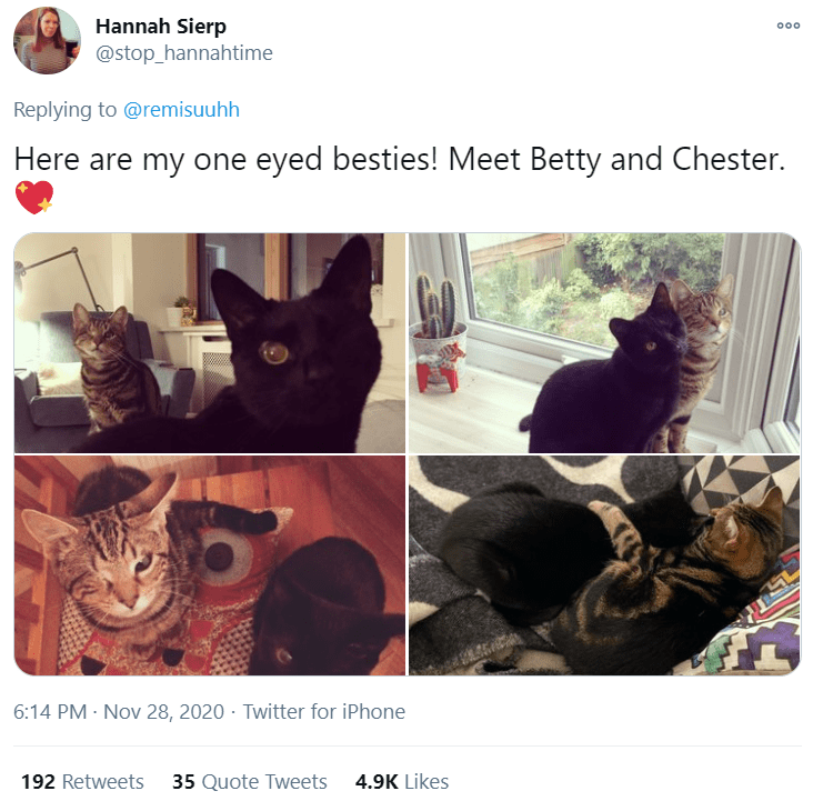 Cat - Hannah Sierp @stop_hannahtime 000 Replying to @remisuuhh Here are my one eyed besties! Meet Betty and Chester. 6:14 PM · Nov 28, 2020 · Twitter for iPhone 192 Retweets 35 Quote Tweets 4.9K Likes