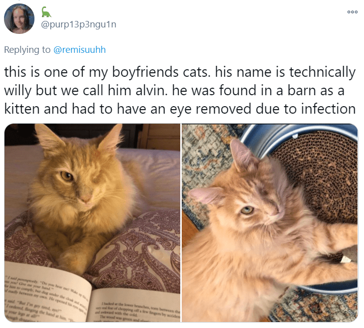 """Cat - 000 @purp13p3ngu1n this is one of my boyfriends cats. his name is technically willy but we call him alvin. he was found in a barn as a kitten and had to have an eye removed due to infection Replying to @remisuuhh 1d perempeonly """"De you hear met W PONd Cine y him o compl, hur dug under the cok nd 1mady berweeny own He opened h ey your hand Thucked a the lower branches, tom beween the chepping off a ew fingen by acide the cold proand py ied, ae dinging the hand hi"""
