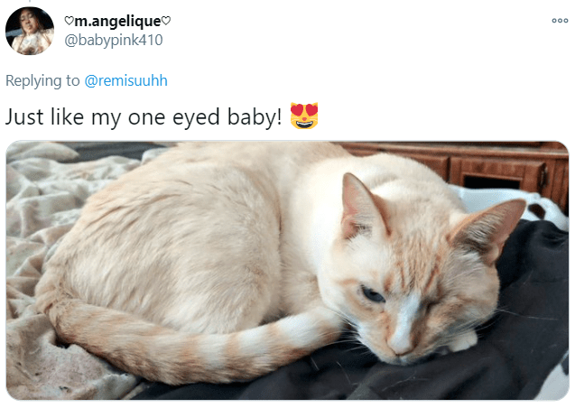 Cat - Om.angeliqueo @babypink410 000 Replying to @remisuuhh Just like my one eyed baby!
