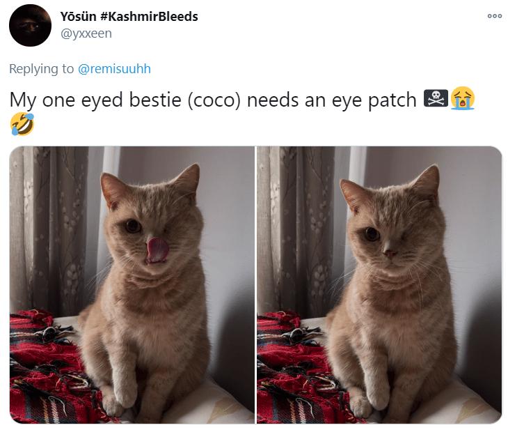 Cat - Yösün #KashmirBleeds 000 @уххеen Replying to @remisuuhh My eyed bestie (coco) needs an eye patch one eX