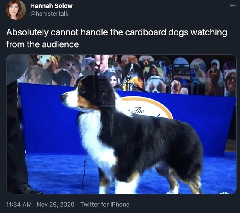 dogs tweets - 9575104768