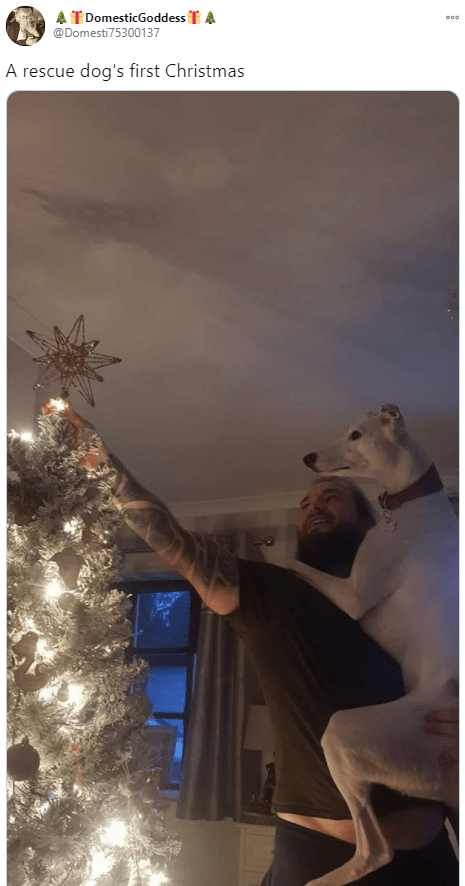 Blue - A T DomesticGoddess T A @Domesti75300137 A rescue dog's first Christmas