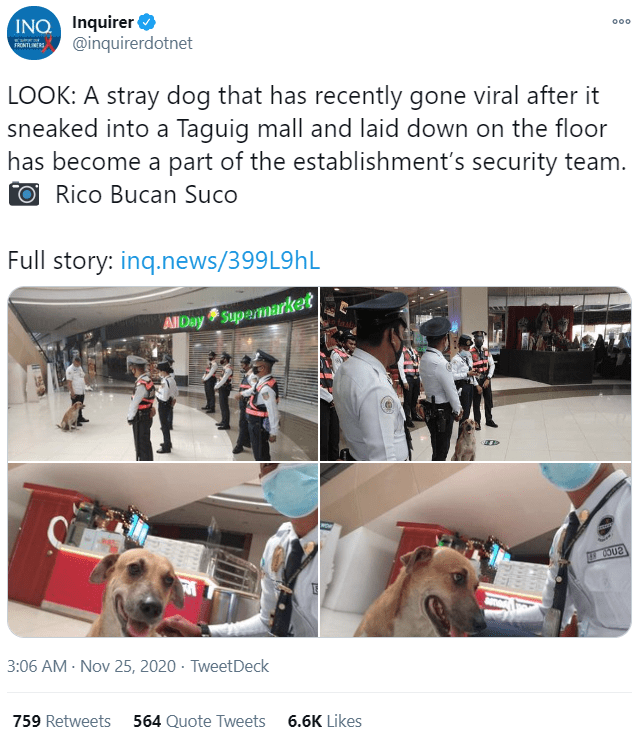 Product - INQ Inquirer @inquirerdotnet 000 FRONTLINE LOOK: A stray dog that has recently gone viral after it sneaked into a Taguig mall and laid down on the floor has become a part of the establishment's security team. ORico Bucan Suco Full story: inq.news/399L9HL AllDay Supermarket 3:06 AM - Nov 25, 2020 · TweetDeck 759 Retweets 564 Quote Tweets 6.6K Likes