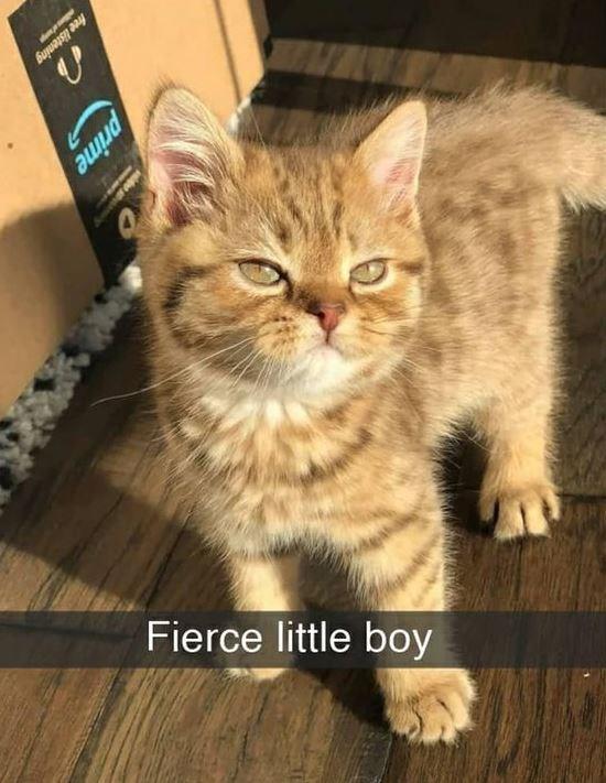Cat - free listening Fierce little boy prime