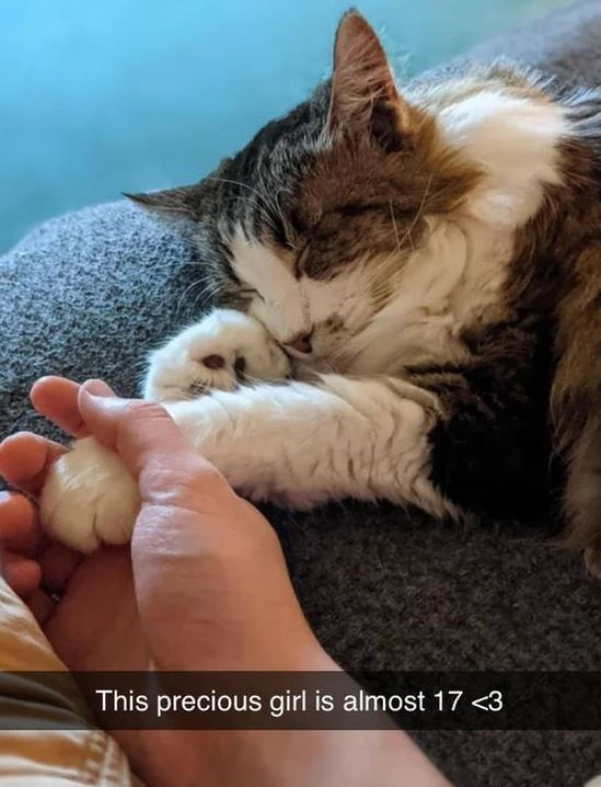 Cat - This precious girl is almost 17 <3
