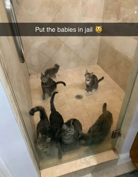 Put the babies in jail