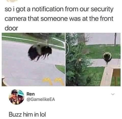 so i got a notification from our security camera that someone was at the front door Ren @GamelikeEA Buzz him in lol | security cam footage of a cute bumblebee bee