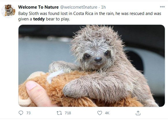 Welcome To Nature @welcomet0nature Baby Sloth was found lost in Costa Rica in the rain, he was rescued and was given a teddy bear to play.