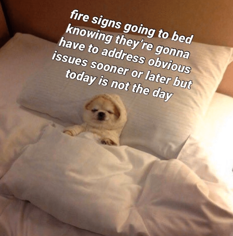 Dog - fire signs going to bed knowing they're gonna have to address obvious issues sooner or later but today is not the day