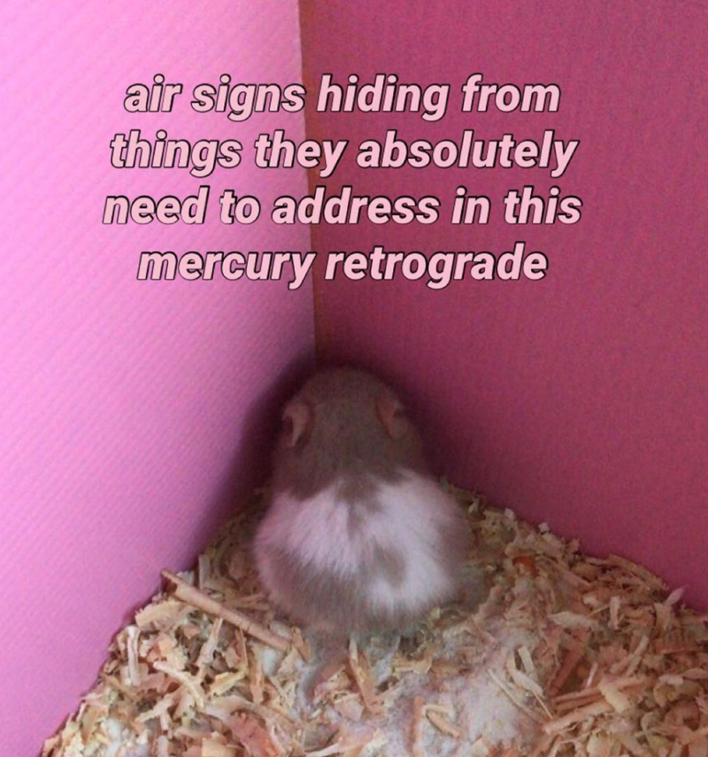Hamster - air signs hiding from things they absolutely need to address in this mercury retrograde
