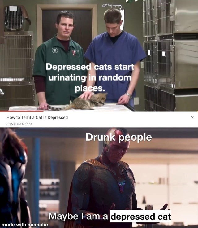 Funny memes, dank memes, alcohol, booze | How to Tell if a Cat Is Depressed Depressed cats urinating random places. Drunk people maybe am a depressed cat