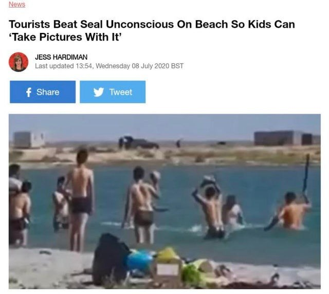 """Leisure - News Tourists Beat Seal Unconscious On Beach So Kids Can """"Take Pictures With It' JESS HARDIMAN Last updated 13:54, Wednesday 08 July 2020 BST f Share Tweet"""