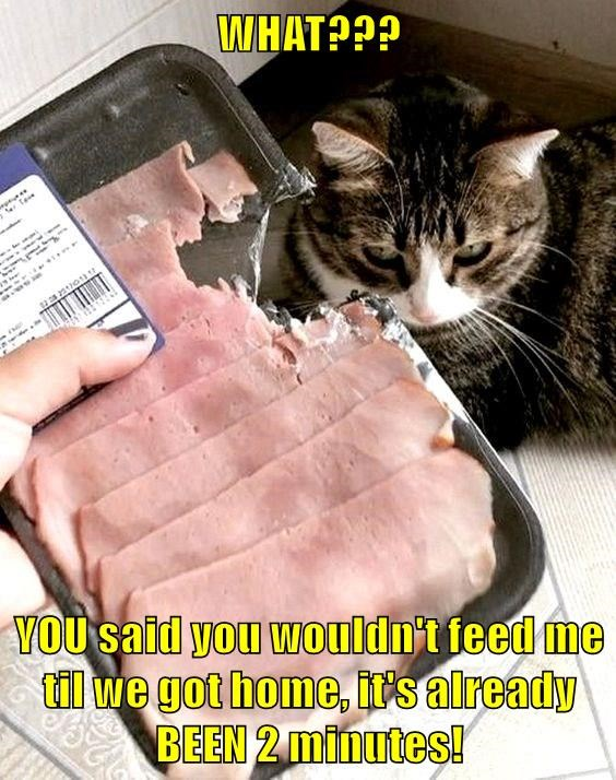 What? you said you wouldn't feed me until we got home it's already been 2 minutes | funny pic of a cat and a sealed pack of salami that has been bitten into