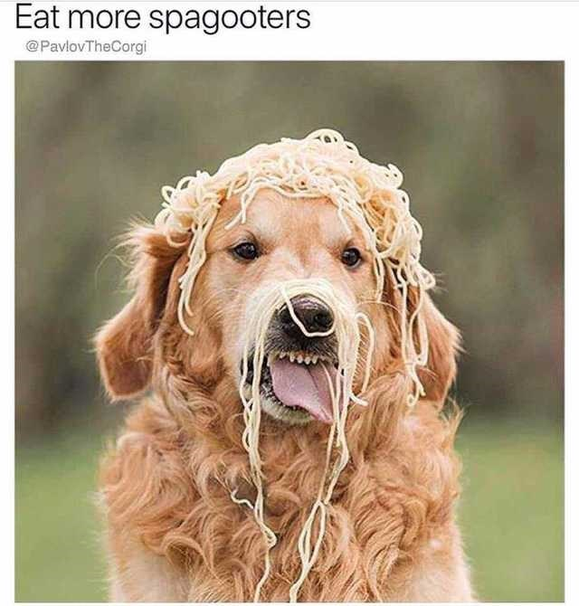 Dog - Eat more spagooters @PavlovTheCorgi