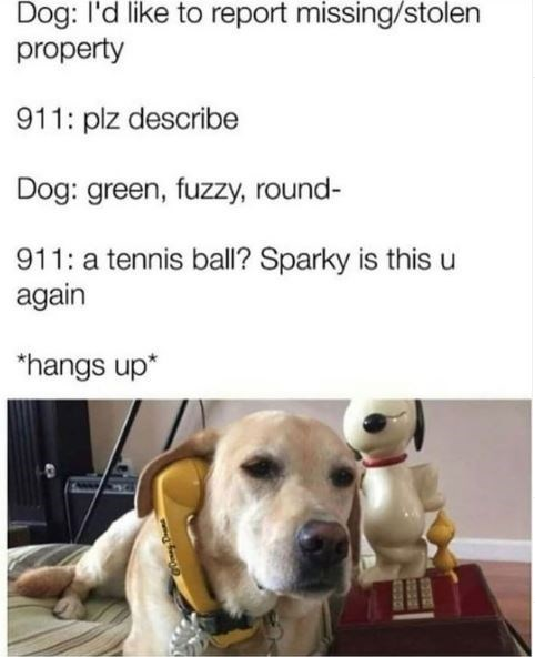 Dog breed - Dog: l'd like to report missing/stolen property 911: plz describe Dog: green, fuzzy, round- 911: a tennis ball? Sparky is this u again *hangs up* SO04