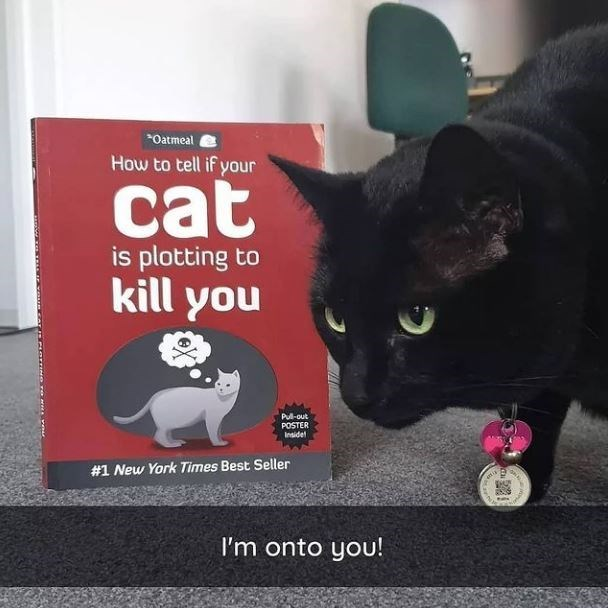 Cat - *Oatmeal How to tell if your cat is plotting to kill you Pul-out POSTER Insidel #1 New York Times Best Seller I'm onto you!