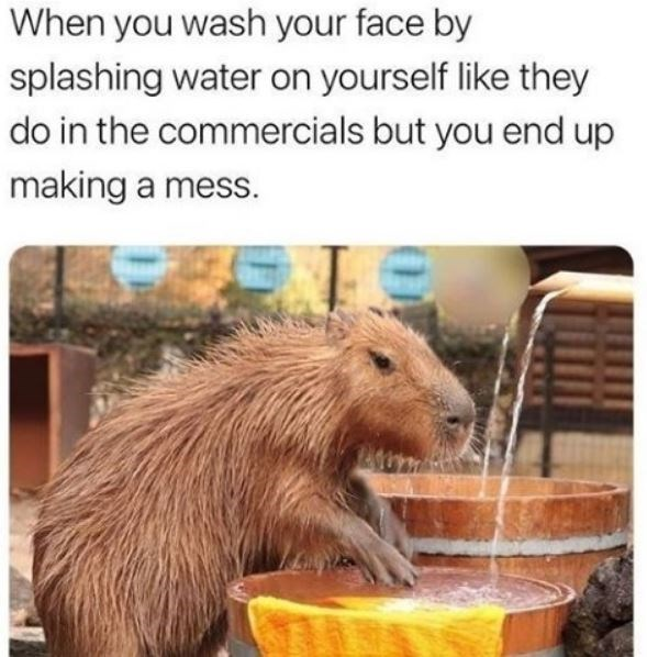 Capybara - When you wash your face by splashing water on yourself like they do in the commercials but you end up making a mess.