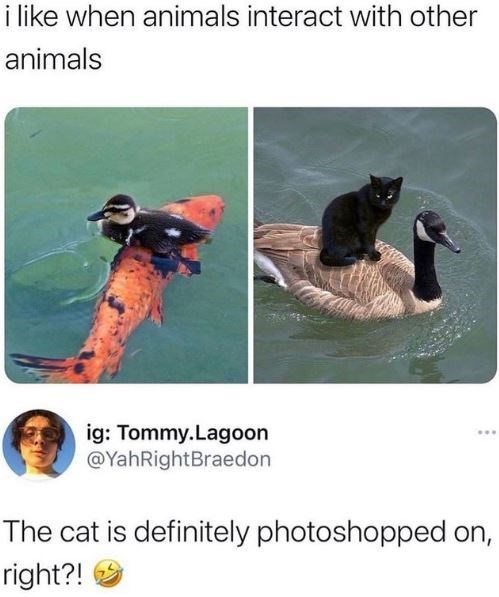 Adaptation - i like when animals interact with other animals ig: Tommy.Lagoon @YahRightBraedon The cat is definitely photoshopped on, right?!