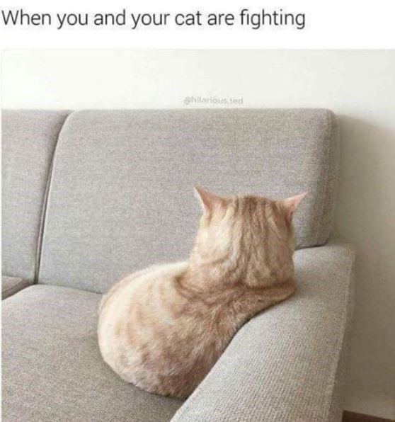 Cat - When you and your cat are fighting @hilarious, ted