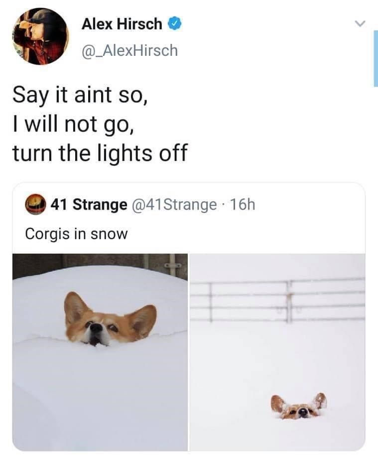 Text - Alex Hirsch @_AlexHirsch Say it aint so, I will not go, turn the lights off 41 Strange @41Strange 16h Corgis in snow