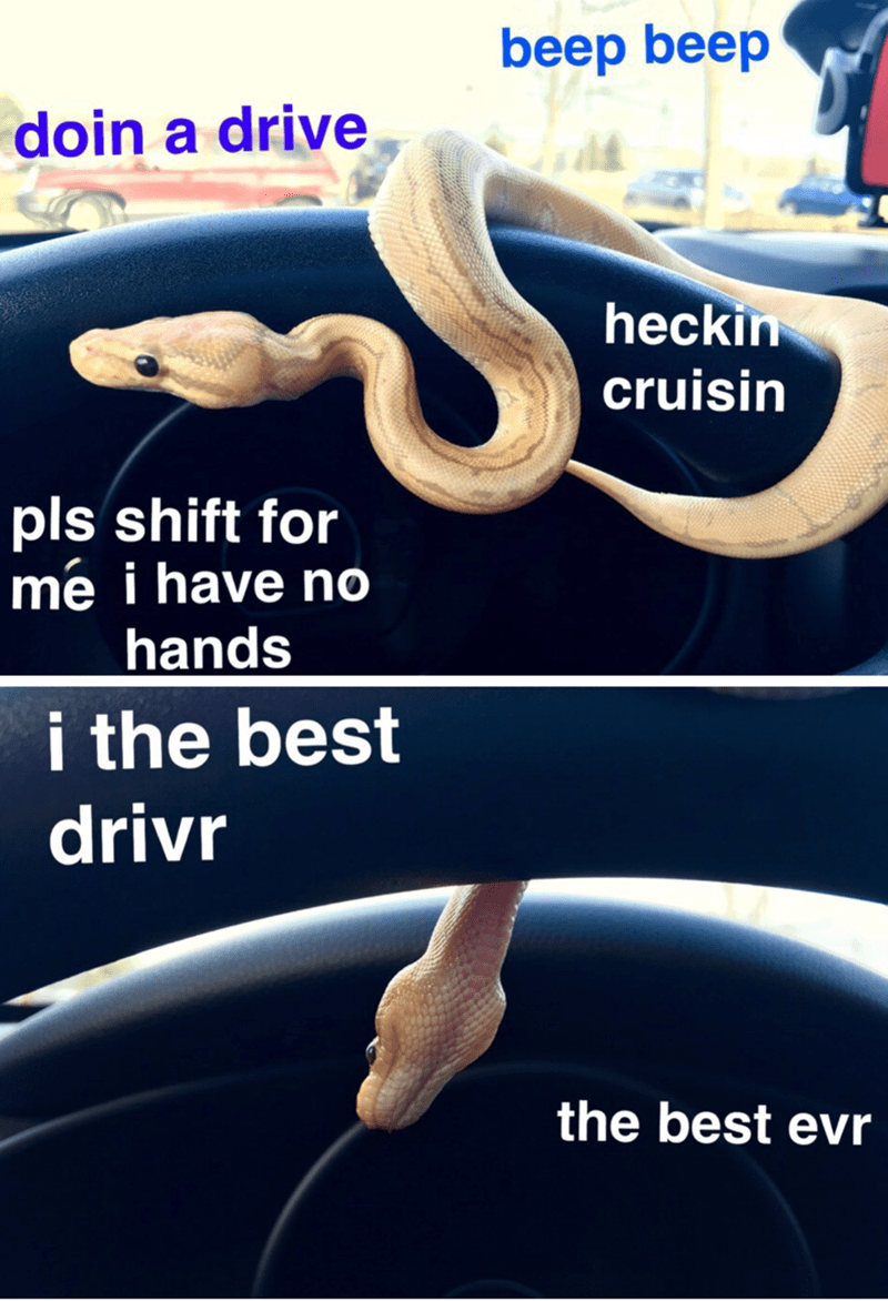 Font - beep beep doin a drive heckin cruisin pls shift for mé i have no hands i the best drivr the best evr