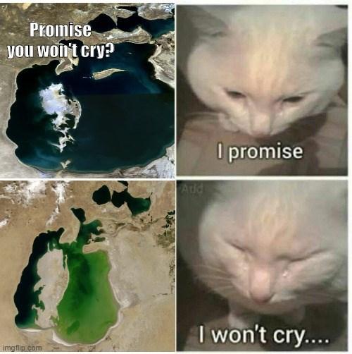 Cat - Promise you won't cry? I promise Ad I won't cry.... imgflip.com
