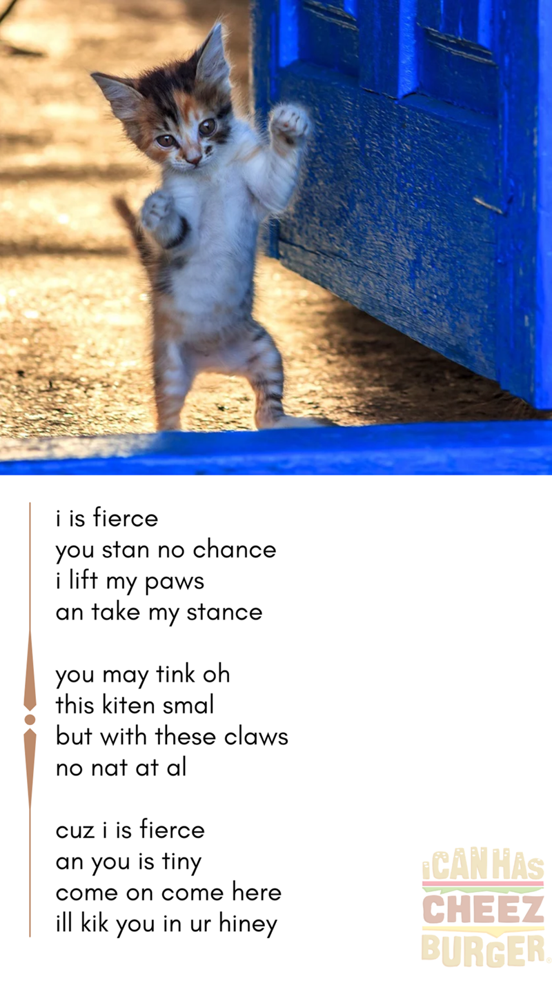 i is fierce you stan no chance i lift my paws an take my stance you may tink oh this kiten smal but with these claws no nat at al cuz i is fierce an you is tiny come on come here ill kik you in ur hiney   cute kitten standing on its back legs