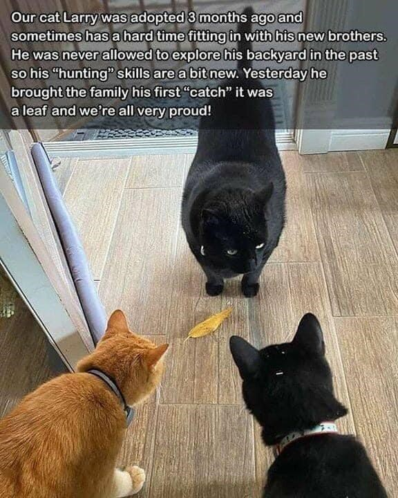 """Cat - Our cat Larry was adopted 3 months ago and sometimes has a hard time fitting in withhis new brothers. He was never allowed to explore his backyard in the past so his """"hunting"""" skills are a bit new. Yesterday he brought the family his first """"catch"""" it was a leaf and we're all very proud!"""