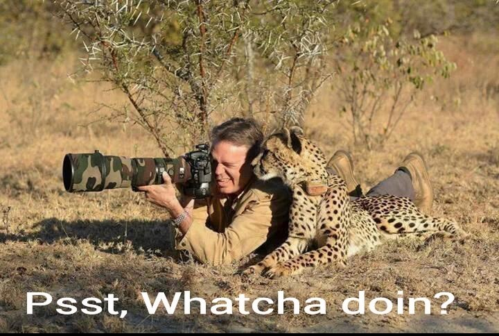Natural environment - Psst, Whatcha doin?
