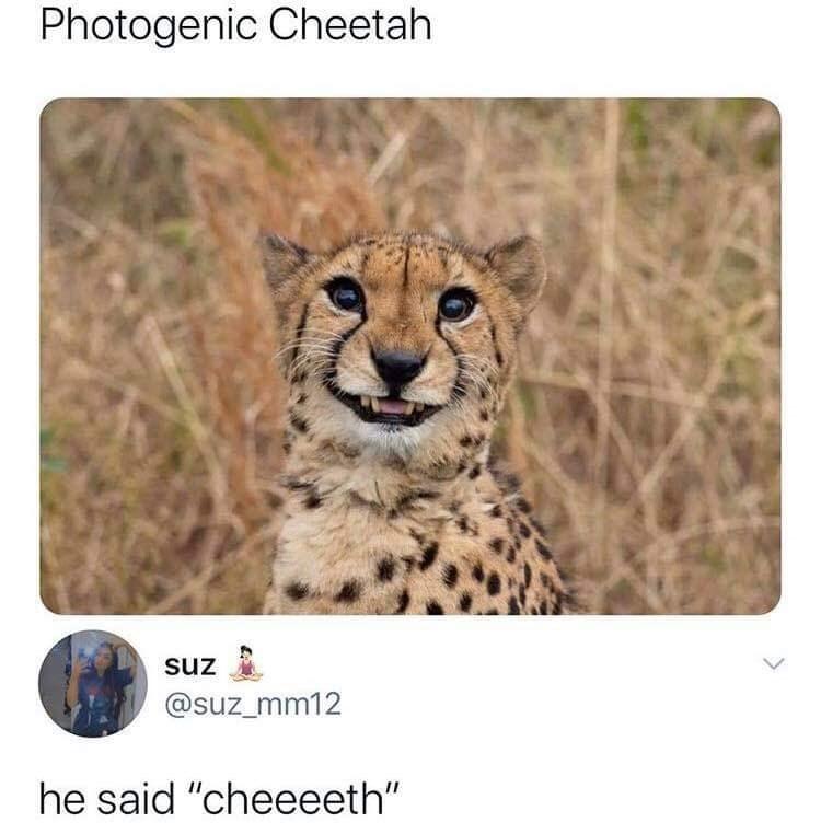 "Nature - Photogenic Cheetah suz @suz_mm12 he said ""cheeeeth"""