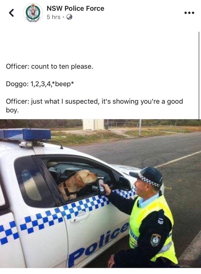 NSW Police Force Officer: count to ten please. Doggo: 1,2,3,4,*beep* Officer: just what I suspected, it's showing you're a good boy. | funny pic of a policeman using a breathalyzer on a dog inside a car