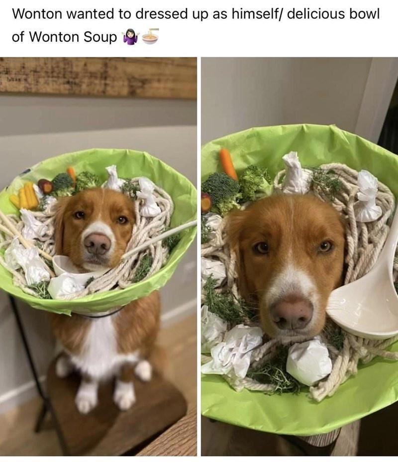 Dog breed - Wonton wanted to dressed up as himself/ delicious bowl of Wonton Soup