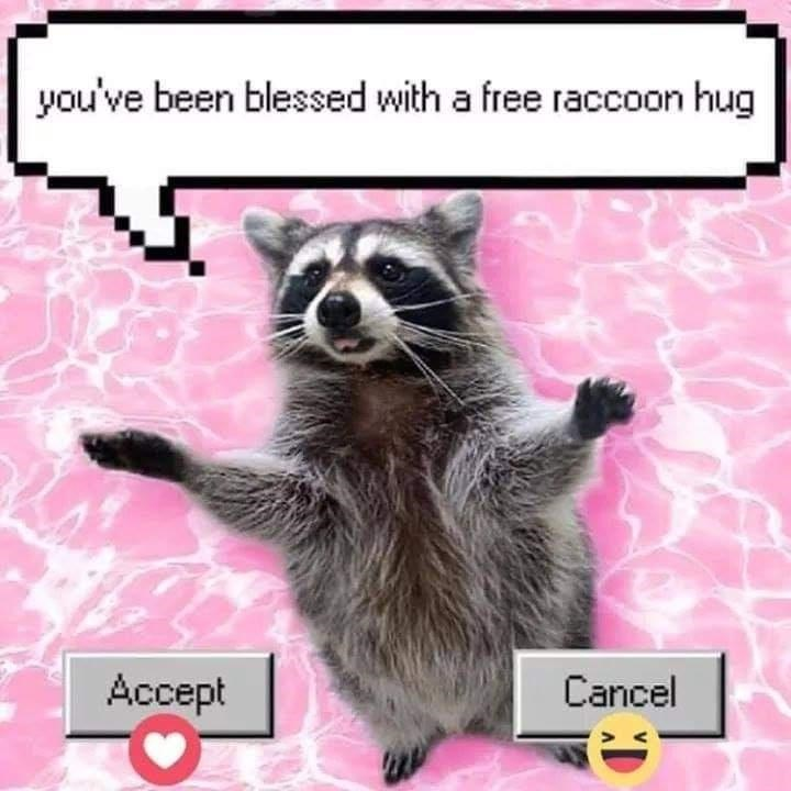 Organism - you've been blessed with a free raccoon hug Accept Cancel