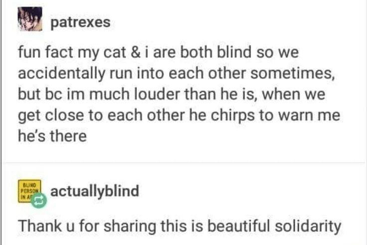 Text - patrexes fun fact my cat & i are both blind so we accidentally run into each other sometimes, but bc im much louder than he is, when we get close to each other he chirps to warn me he's there BUNO PERSON IN AF actuallyblind Thank u for sharing this is beautiful solidarity