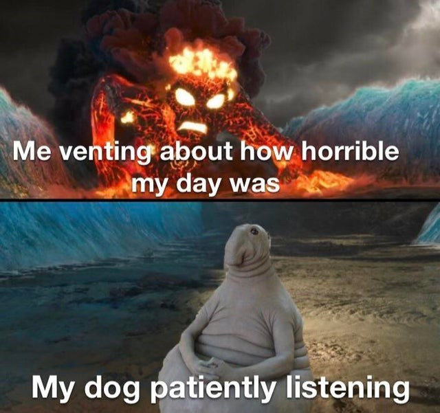 Geological phenomenon - Me venting about how horrible my day was My dog patiently listening