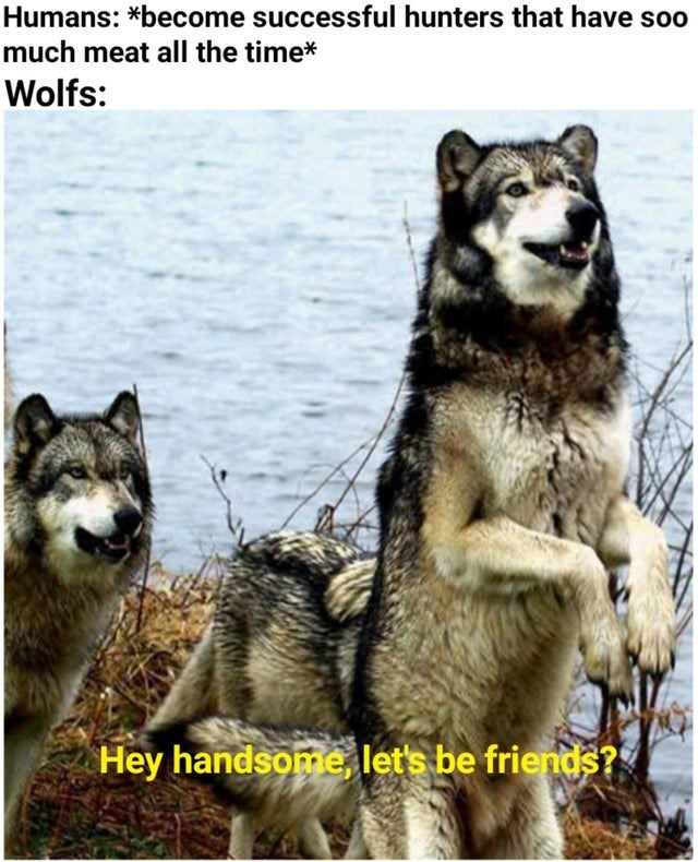 Vertebrate - Humans: *become successful hunters that have soo much meat all the time* Wolfs: Hey handsome, let's be friends?