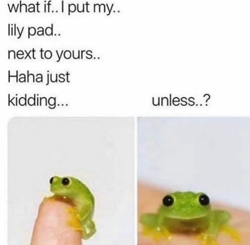 frogs, cute, funny memes, wholesome, memes | what if.. I put my.. lily pad.. next to yours.. Haha just kidding... unless..?