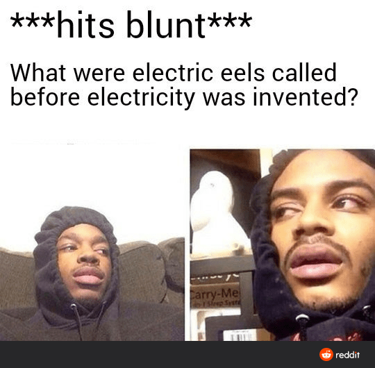 Cheek - ***hits blunt*** What were electric eels called before electricity was invented? Carry-Me -ESfrep Syet O reddit