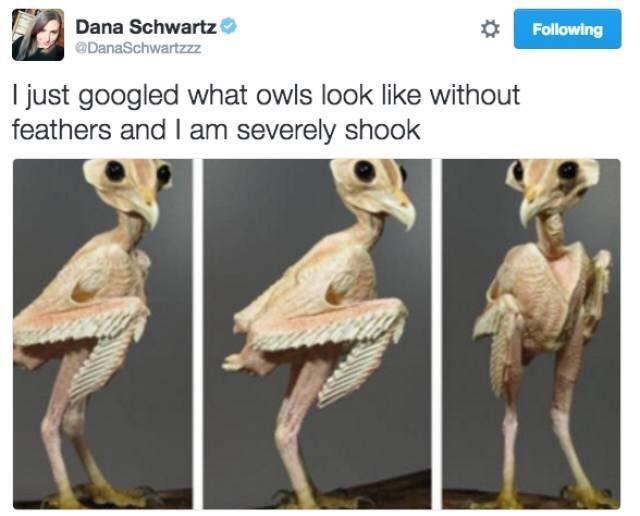 Organism - Dana Schwartz Following @DanaSchwartzzz I just googled what owls look like without feathers and I am severely shook