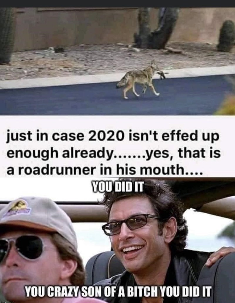 Eyewear - just in case 2020 isn't effed up enough already...yes, that is a roadrunner in his mouth.... YOU DID IT YOU CRAZY SON OF A BITCH YOU DID IT