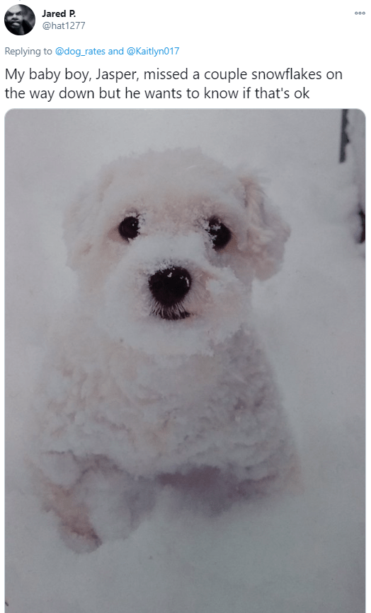 Dog breed - Jared P. 000 @hat1277 Replying to @dog_rates and @Kaitlyn017 My baby boy, Jasper, missed a couple snowflakes on the way down but he wants to know if that's ok