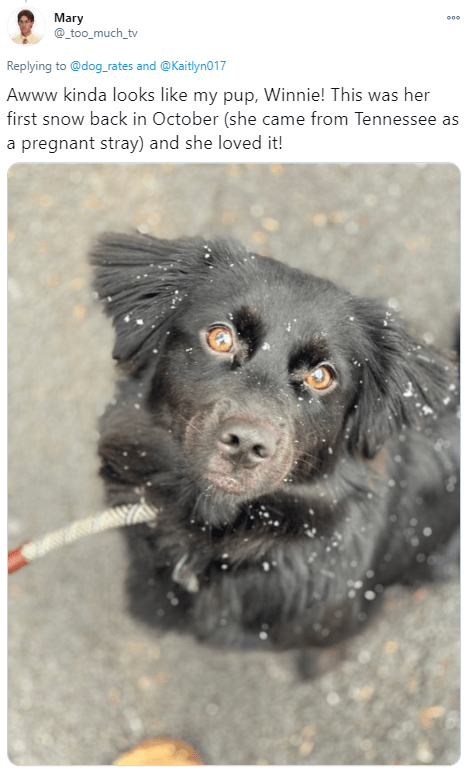 Dog breed - Mary @_too_much_tv Replying to @dog_rates and @Kaitlyno17 Awww kinda looks like my pup, Winnie! This was her first snow back in October (she came from Tennessee as a pregnant stray) and she loved it!