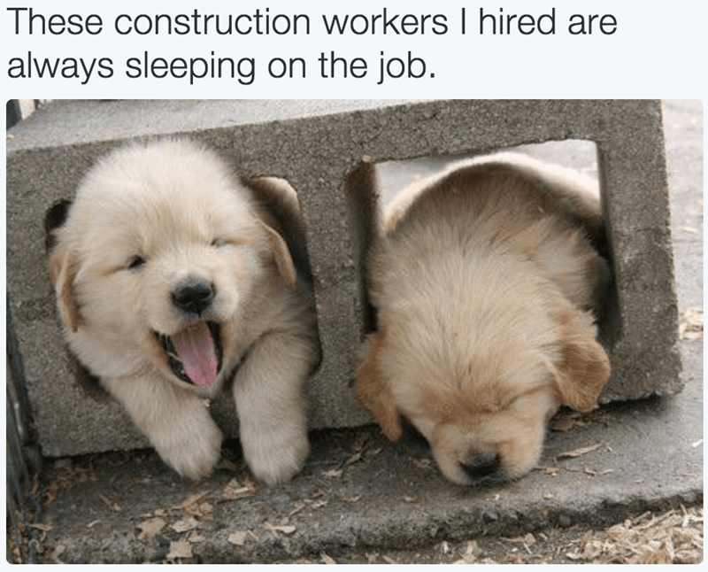 These construction workers I hired are always sleeping on the job | two cute puppy dogs sleeping in a brick