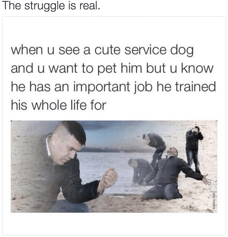 The struggle is real. when u see a cute service dog and u want to pet him but u know he has an important job he trained his whole life for Dramatic Dmitry