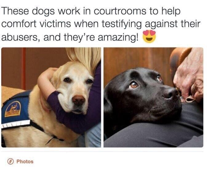 These dogs work in courtrooms to help comfort victims when testifying against their abusers, and they're amazing! @ Photos